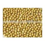 chinese small yellow beans supplier