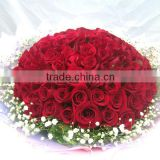 Multi-Colored Color and Fresh Cut Flowers Processing Type Cheap Red Rose