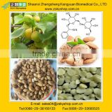 Natural Bitter Apricot Seed Extract/Almond Extract Powder from GMP Manufacturer