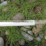 The fluorescent lamp used for aquarium fish and plant breed