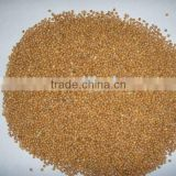 Chinese yellow broomcorn millet