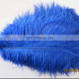 beauty 45-50cm blue ostrich feather