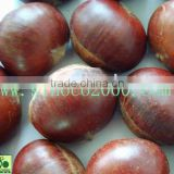 Chestnuts Food In China