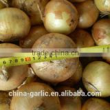 2014 New Season!!! Want to buy Onion (Red Onion, Yellow Onion)