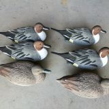 Standard pintail floater decoy puddle duck hunting floating pintail foam filled