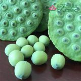 Lotus Seed Lotus Nut Lotus Kernel Fruit Lotus Seed Lotus Seed Pods, Fresh and Tender Lotus Seed