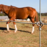 hot sell fixed knot wire mesh horse fence from china
