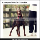 Small GPS Tracker For Personal/Child/Cell Phone GPS Locator Dog GPS Tracker Tracking System gps tracker for pet