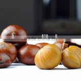 2016 high quality bulk chestnut in china/Healthy Nuts/Natural taste and sweet