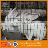 commercial rabbit farming in kenya /rabbit farming equipment / rabbit cage in kenya farm