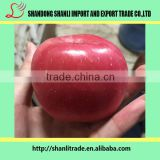 buy paper bagged/fresh yiyuan fuji apple/chinese apple price
