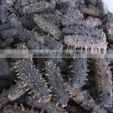 Dried Sea Cucumber - High Quality and Best Price
