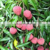 Sell fresh sweet litchi