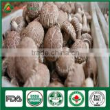 Best seller High Yield China Supplier ISO9001 Certified Mushroom Shiitake Grow Log Cultivation Kits
