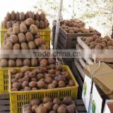 super supplier for fruit kiwi fruit 2012