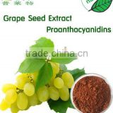 GMP Manufacturer Water Solubility and Pure grape seed extract powder proanthocyanidins 95%