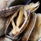 Frozen short neck clam with shell