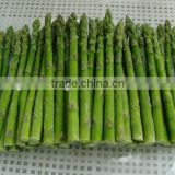 Frozen Green Asparagus with BRC/Kosher/HACCP