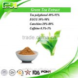 100% Natural Green Tea Extract, Tea polyphenols 30%-98%, Green Tea Extract egcg 90% for weight loss