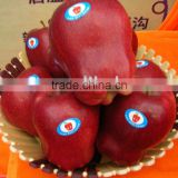 red delicious apple/huaniu apple