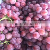 2015 good quality and low price Chinese grape for sale