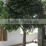 2015 factory price hot sale artificial banyan tree with real wood trunk