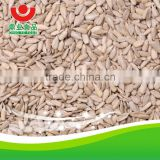 sunflower seeds kernel