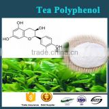 GMP Factory Supply Best Quality 100% Natural Green/Red Tea Herbal Extract 99% Tea Polyphenol Powder