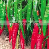 Hybrid green red chilli pepper seeds for sale-Kezheng No.3