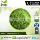 Top Rated Manufacturers and Suppliers of Health Beneficial Wheat Grass Powder at Favorable Price