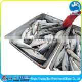 Fresh Frozen pacific mackerel whole round with mackerel fish factory