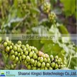 GM&Kosher BNP Supply Top Quality Weight Loss Green Coffee Bean Extract/P.E Chlorogenic Acid