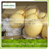 New Crop High Quality Fresh Pear