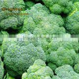 Top quality with free sample Broccoli Sprout P.E.10:1