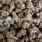 hot sale high quality Sanchi extract/Panax Notoginseng Extract
