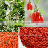 Factory wholesale hot and organic product goji berry extract powder