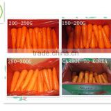 2014 fresh carrots onion potato