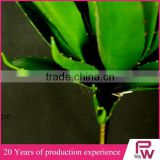 indoor ornamental tropical green foliage plants sale