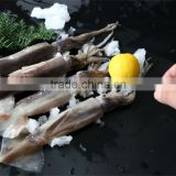 Frozen Argentinus Squid 150-200g