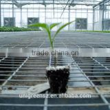 agricultural steel greenhouse seedbed for nursery ebb and flow rolling bench