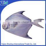white pomfret whole round fish for sale