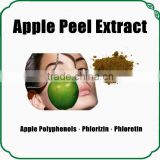Natural Top Quality Apple Peel Extract Powder Phlorizin 98%