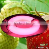 equal magnetic induction ufo 90w led grow light red 630nm blue 460nm