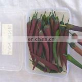 CHILLI DESIGN INCENSE STICK GIFT BOX