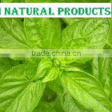 All Over No.1 Fresh Basil Essential Oil