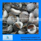 Supply grade A frozen moon snail