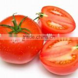 Hybrid tomato seeds best quality for plant