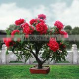 beautiful outdoor decorative peony flower light bonsai