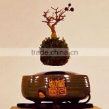 wholesale cheap Garden tree palm air plants bonsai