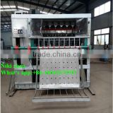 Automatic pig dehairing machine for pig slaughter house machine,pig hair removal machine